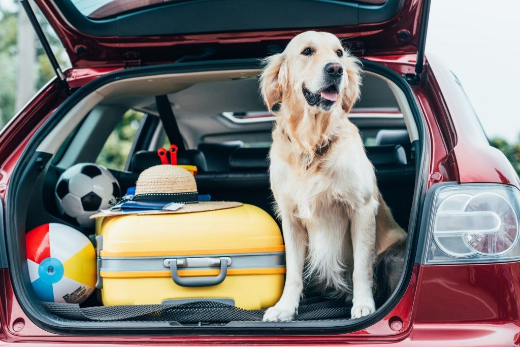 Pet Friendly Hotel in AB: Making the Most of Your Road Trip